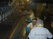 рабочие на птицефабрику